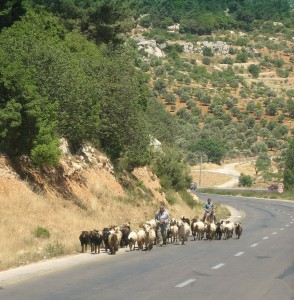 heavy traffic in Jordan
